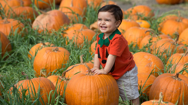 Cal Poly Pomona Pumpkin Festival to Kick Off 'Month of Pumpkins'