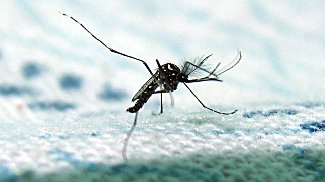 Mosquitoes carrying the West Nile virus have been detected at Cal Poly Pomona. Photo credit: Jose David Mendoza Terra, Flickr Creative Commons