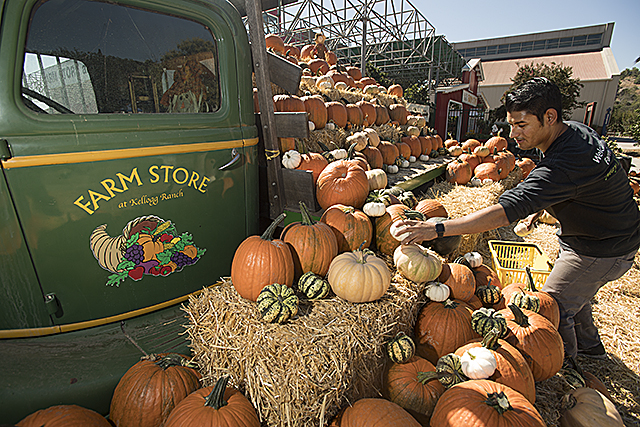 Farm Store Pumpkins
