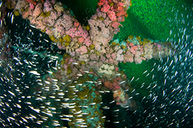 fishes in rocky reefs