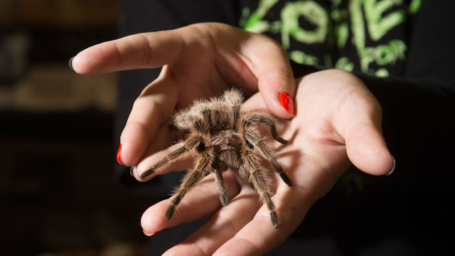 The annual Insect Fair returns Oct. 8 and 9.