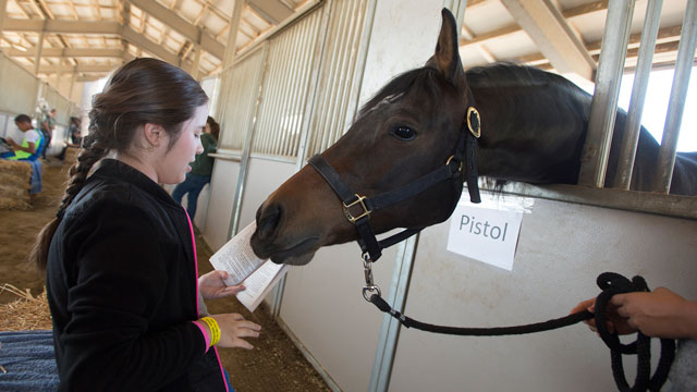"A fourth-grade student from Kellogg Elementary School in Pomona reads a chapter from ""The Black Stallion"" to Pistol during a Reading to Horses event at the W.K. Kellogg Arabian Horse Center in May."