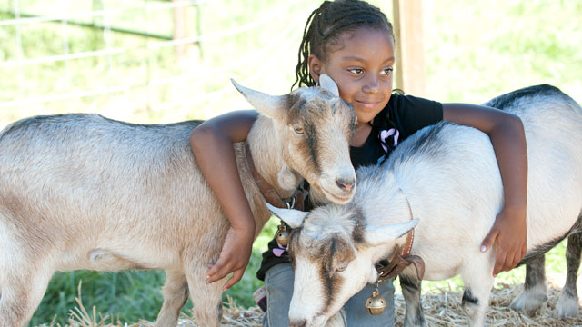 Paris Moore, age 6, hugs a pair of goats at Danny's Farm Petting Zoo at Agriscapes at Cal Poly Pomona October 11, 2011.