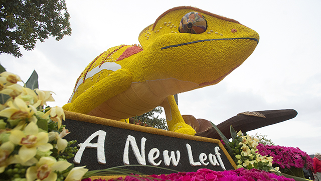 he Cal Poly Universities Rose Float, A New Leaf,  before making its way down Colorado Blvd in  Pasadena during the 2017 Rose Parade.
