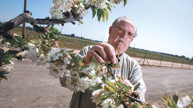Part farmer and part scientist, Don Huntley experimented with cross-breeding 20 varieties of cherries to find the best-tasting type at an orchard he owned in 2009.