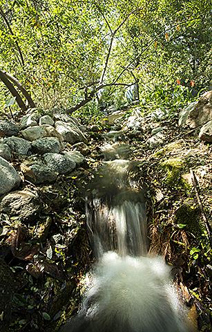BioTrek Waterfall