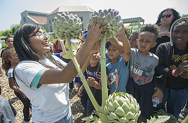 Second graders from Emmerson Elementary School in Riverside learn about artichokes at the gardens at Agriscapes at Cal Poly Pomona.