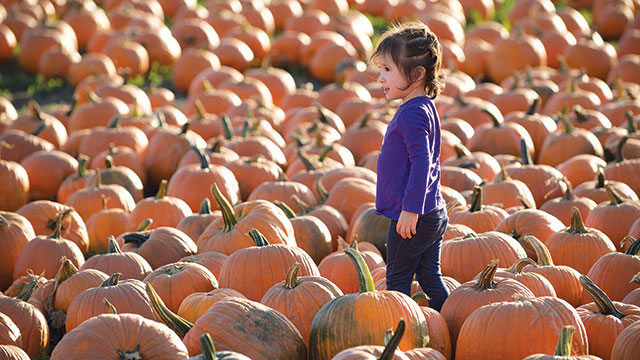 Youngsters at the Cal Poly Pomona pumpkin patch.