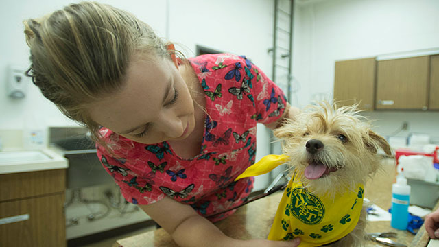 Jackson gets his Cal Poly Pomona bandana after getting his nails trimmed at Pet Spa Day organized by the Department of Animal and Veterinary Sciences last May.