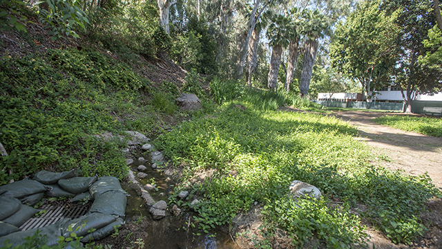 Before the landscape restoration work began, the stream was impeded and hidden by overgrown foliage.