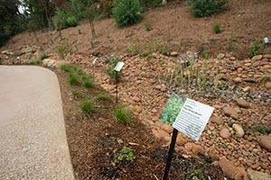 Plants along the Project Blue creek.