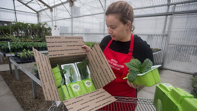Heidi Holmquist, a second year grad student, packs plants for shipping.