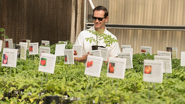 The Cal Poly Pomona Nursery's 20th annual tomato plant sale will feature more than 100 varieties.