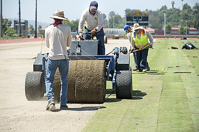 Workers lay new sod at the Kellogg Soccer Stadium at Cal Poly Pomona.