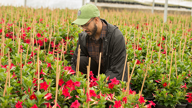 Neil Pathak, a plant science senior, examines flowers at a nursery in Fallbrook, Calif.