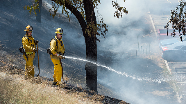 Two firefighters extinguishing a brush fire