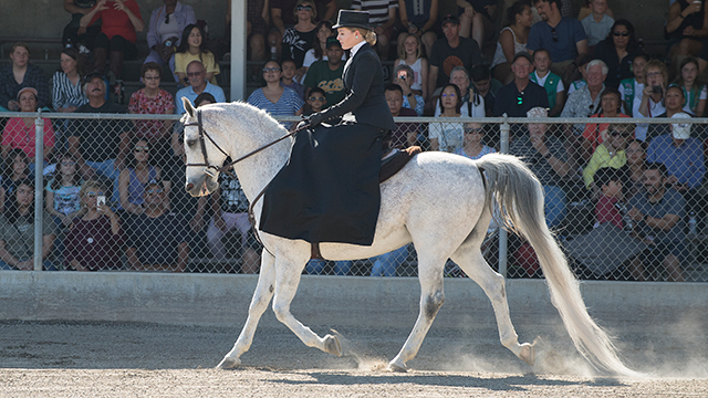 Student rides Arabian Horse during Sunday Horse Show.