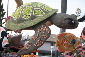 Turtle and fish on Rose Float