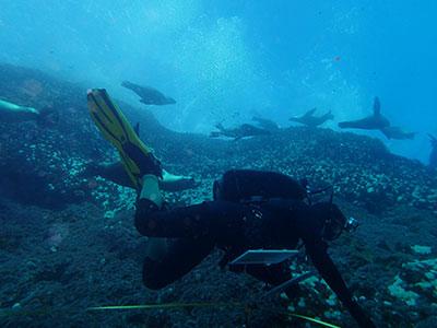 Prof. Claisse conducting rocky reef surveys