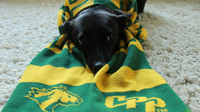 A dog, Kuro, wearing a CPP scarf