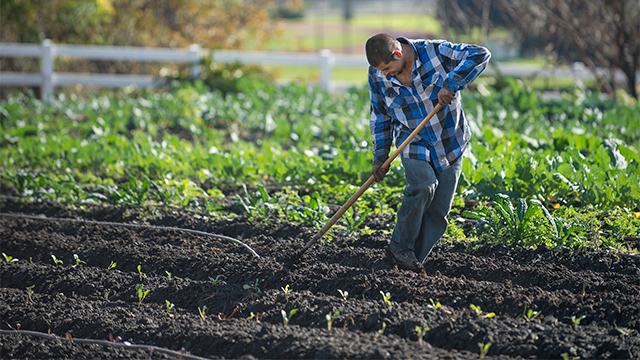 A man plants seeds in a Culinary Garden