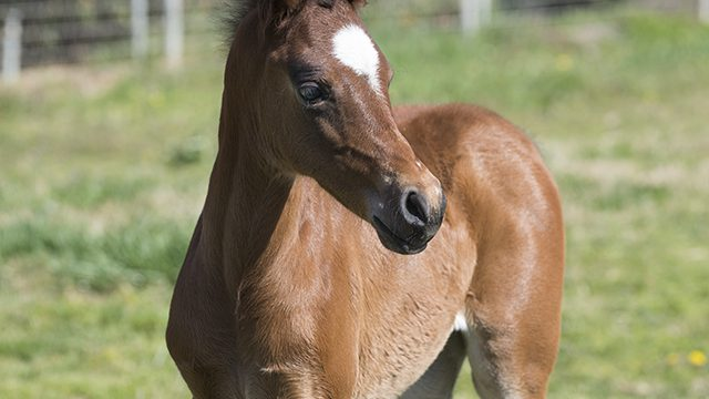 New Filly