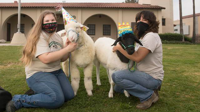 Jillian Wood and Sophia Gaitan with young sheep Bear and Oreo